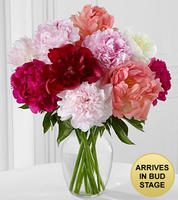 $39In Full Bloom Peony Bouquet - 10 Stems - VASE INCLUDED