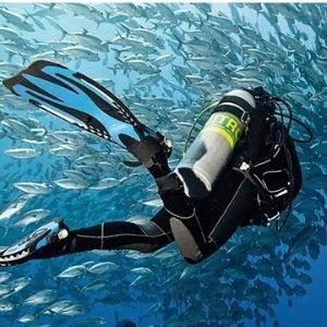 $121PADI Open-Water Scuba-Certification  Santa Cruz