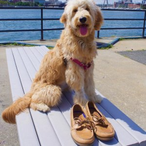 As Low As $17.99Sperry Men's Boat Shoes Sale