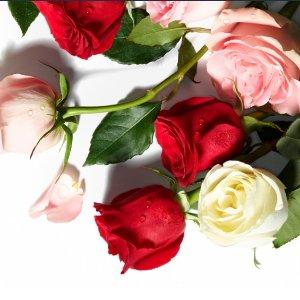 $19.99Two Dozen Roses @ Amazon