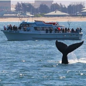 With Extra 25% From $21.75 Whale-Watching Cruise Admission for One, Two, or Four